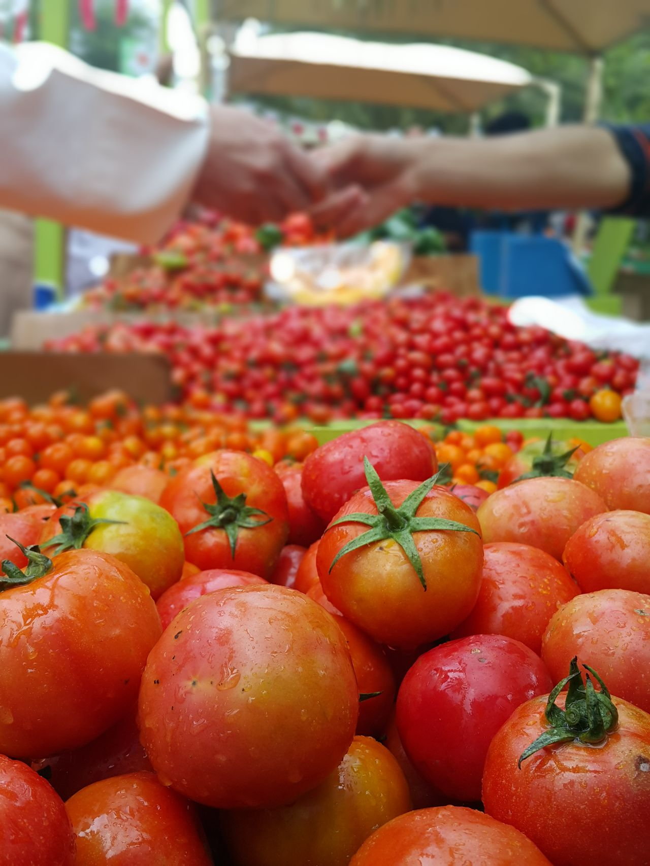 Stalking the tomato guy for 'action' shots🍅📸 Healthy Eating Food Freshness Market Stall Abundance Healthy Lifestyle Business Hands Close-up Juicy Vegetables Tomatoes Sale Farmers Market Commerce Transaction