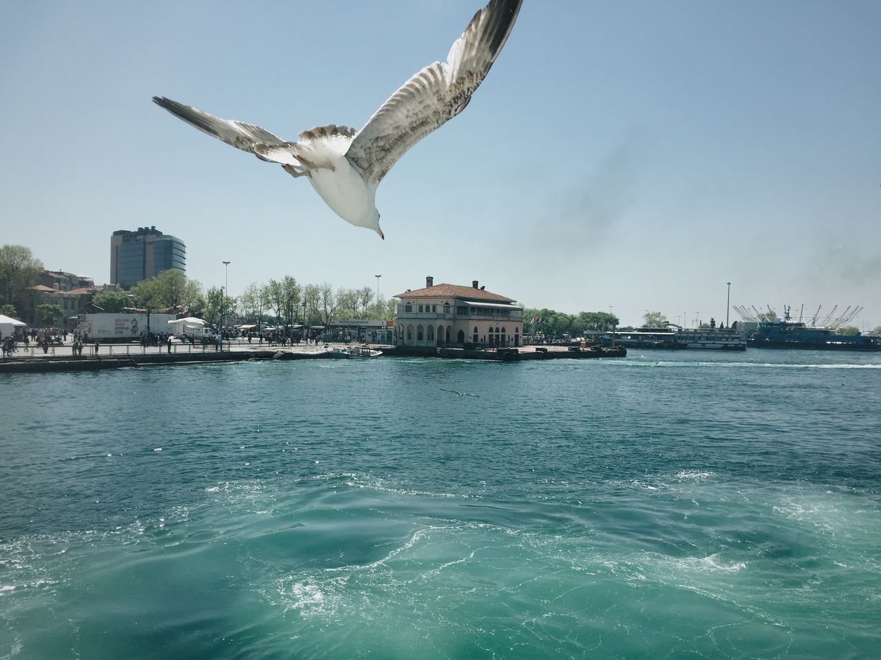 Beautiful stock photos of istanbul, Animal Themes, Bird, Blue, Day