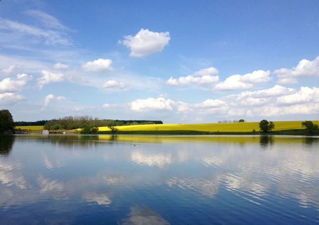 Beauty In Nature Clouds Clouds And Sky Field Green Lake Landscape Nature Outdoors Reflection Sky Tree Tree Trees Yellow Flowers