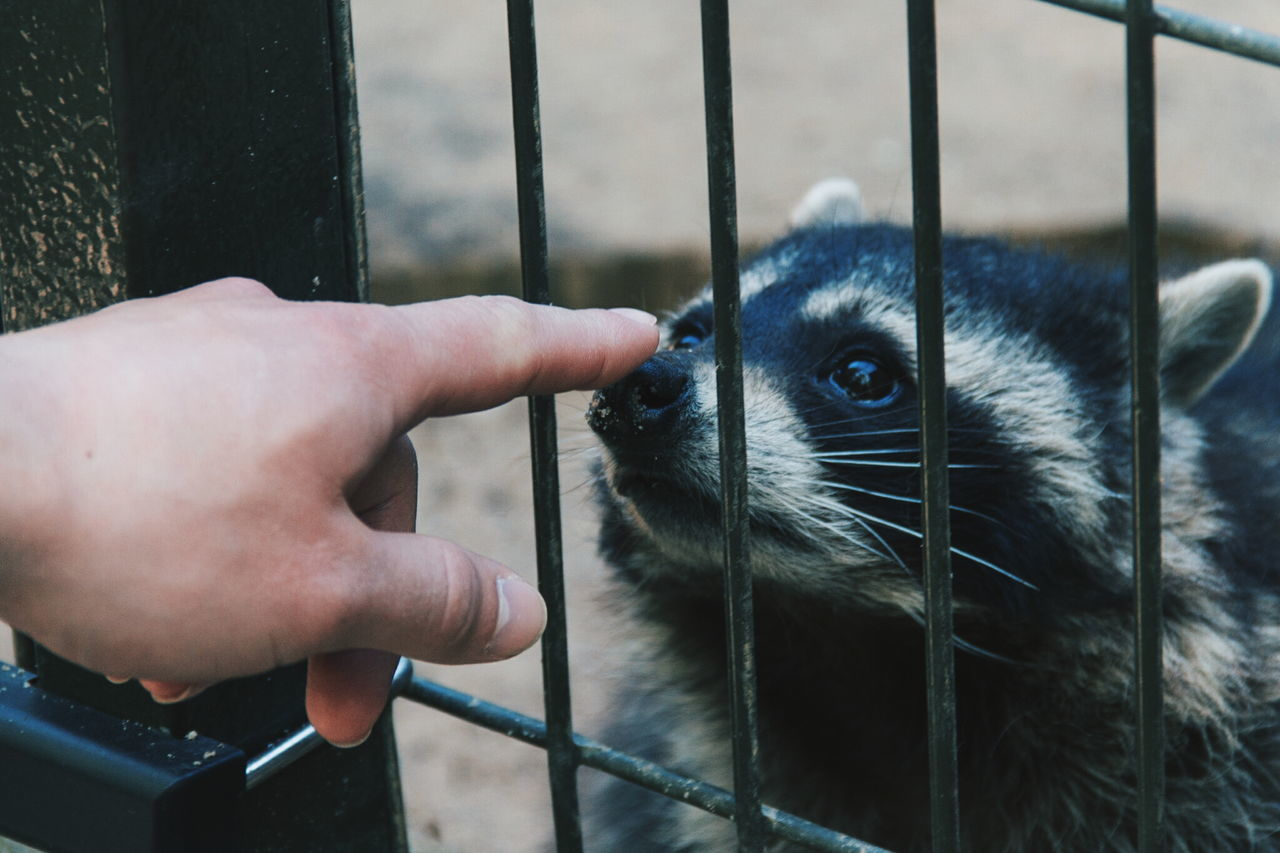 One Animal Trapped Animal Human Body Part Cage One Person People Human Hand Adult Animal Themes Indoors  Prison Close-up Adults Only Mammal Zoo Day Nature
