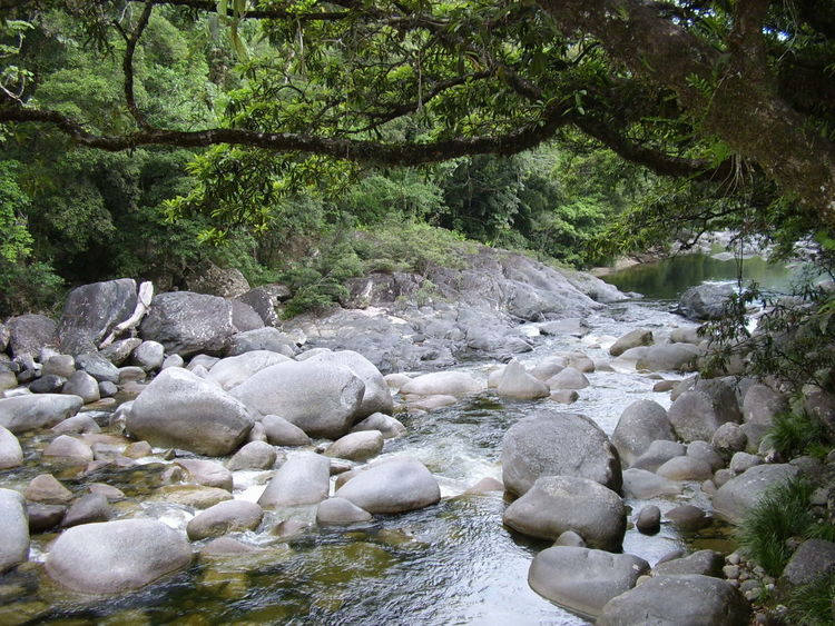 Beauty In Nature Nature River Rock Rock - Object Stone Stone - Object Tranquil Scene Tranquility Tree Water Water Flow