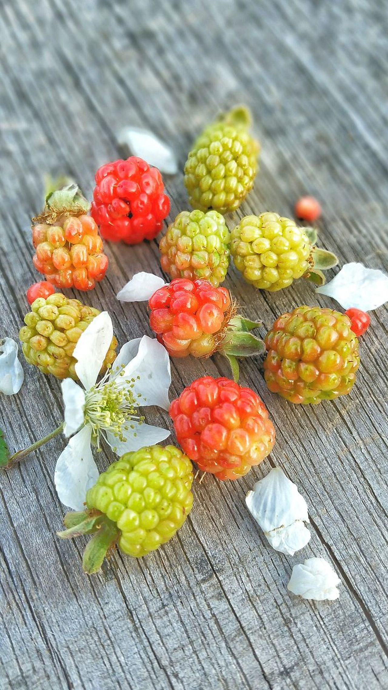 Fruit Food Close-up Variation Healthy Eating Outdoors Day Nature Flower Freshness Room For Copy Room For Text Backgrounds Wild Weathered Wood Unripe Blackberry Wild Blackberries Dew Berries Multi Colored Wild Berries Group Bunch Nature Ready-to-eat Visual Feast