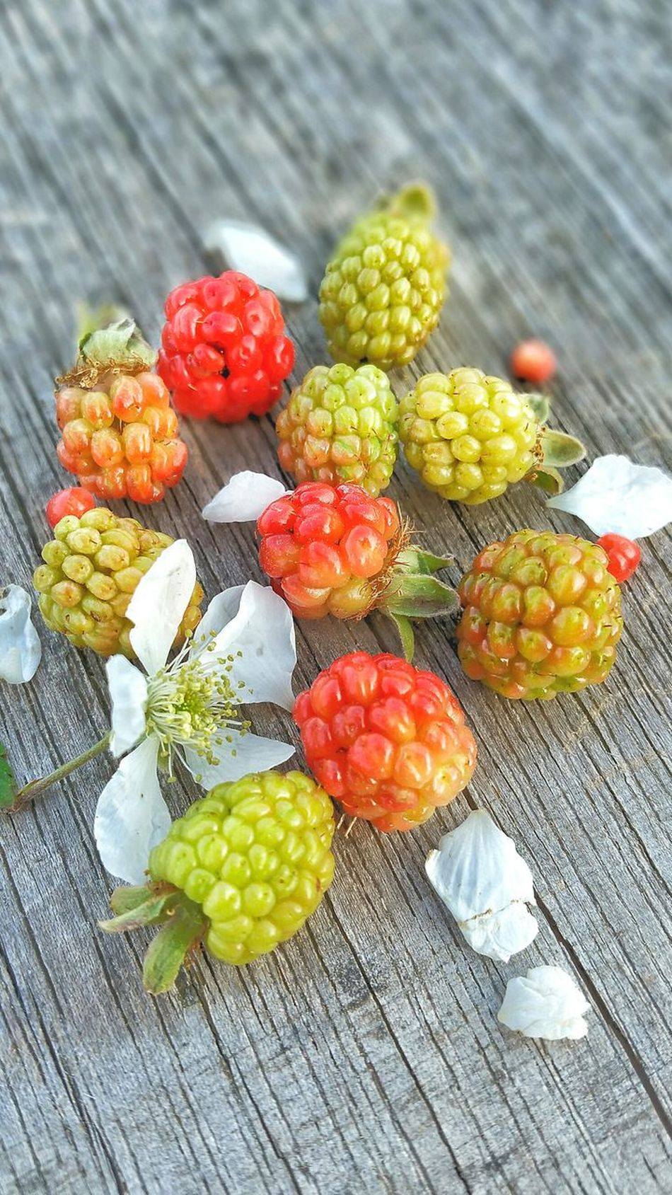 Fruit Food Close-up Variation Healthy Eating Outdoors Day Nature Flower Freshness Room For Copy Room For Text Backgrounds Wild Weathered Wood Unripe Blackberry Wild Blackberries Dew Berries Multi Colored Wild Berries Group Bunch Nature Ready-to-eat