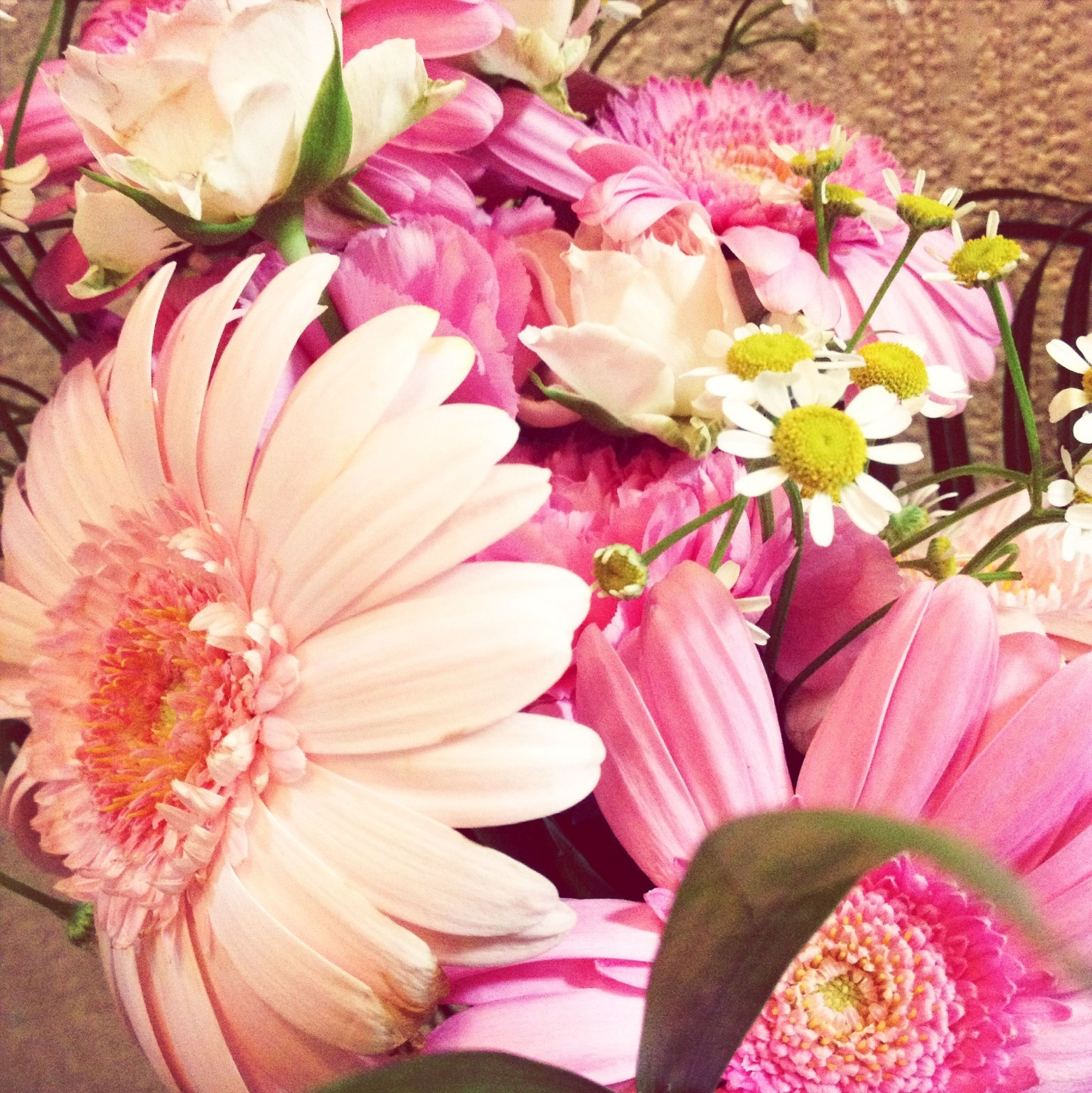 flower, freshness, petal, pink color, fragility, flower head, high angle view, close-up, full frame, variation, indoors, multi colored, beauty in nature, abundance, backgrounds, pink, nature, no people, still life, bouquet