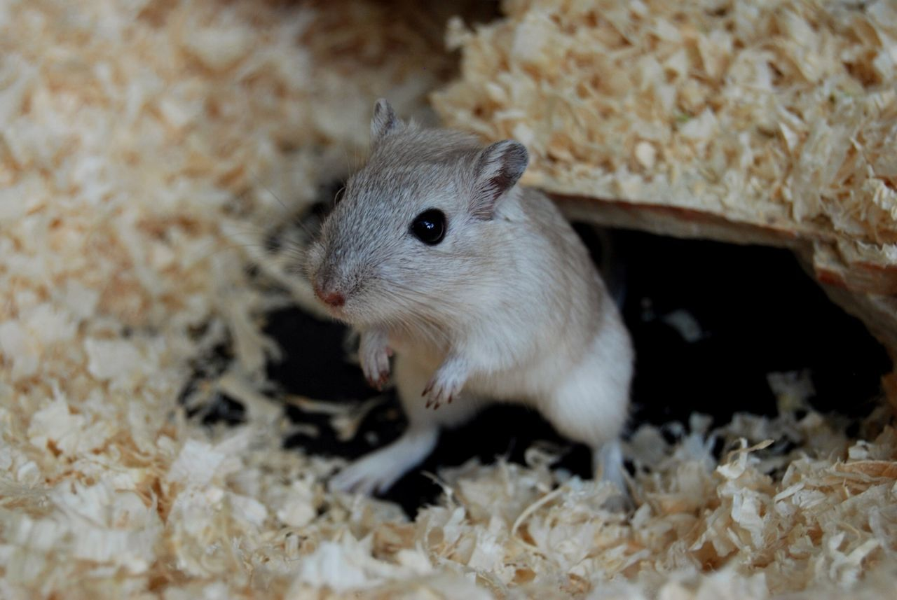 Mouse Animal Tiny Hay Zoo Zoo Animals  Zoom Eye4photography  Taking Photos Nature On Your Doorstep