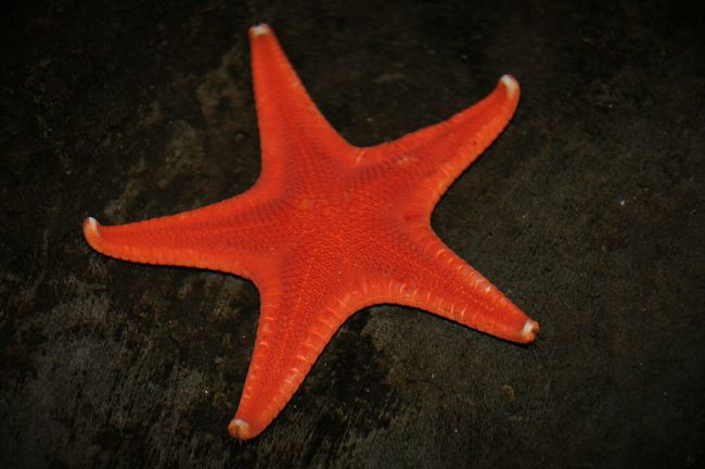 Beauty of the sea Starfish  Sealife Beauty Oceanlife Starlight Amazing_captures Photooftheday StarfishBeSoCute Starfish Succulent Beautiful Day
