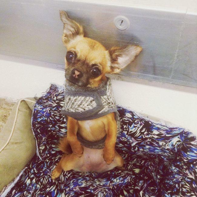 Sit pretty Winnie☺️ Cute Pets Cuteness