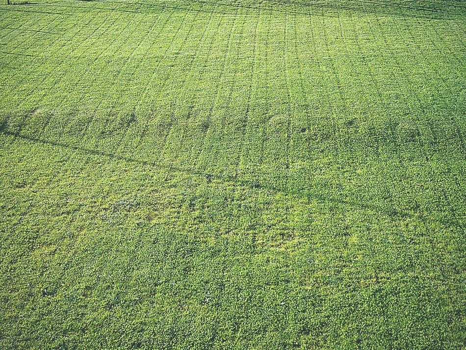 Geometric The Grass Is Green