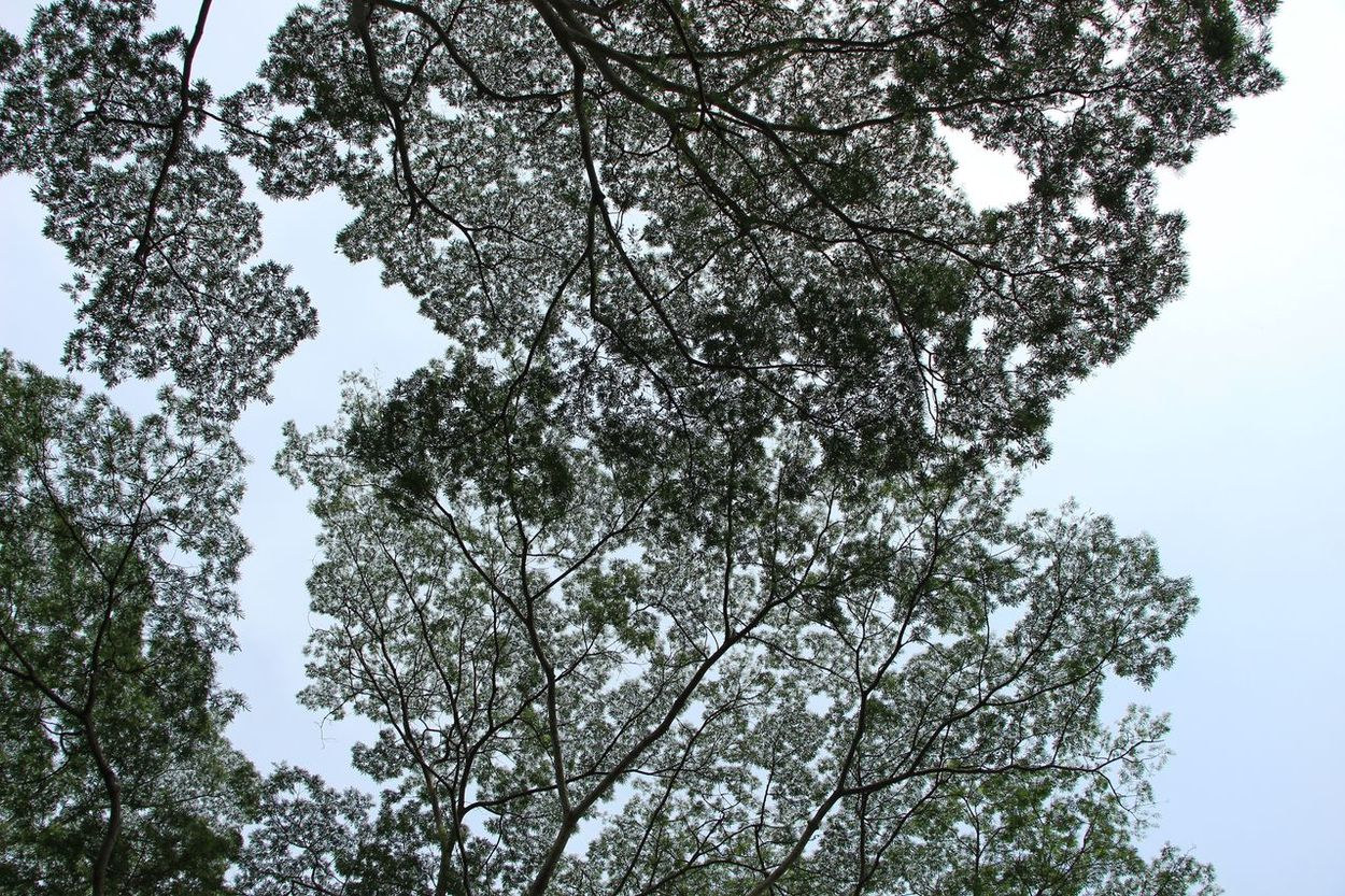 Dramatic Angles Tree Low Angle View Branch Nature Tranquility Sky Outdoors