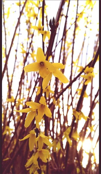 Day Nature Yellow Outdoors Flower Yellow Flowers