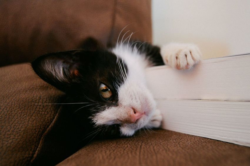 Cute cat Animal Themes Book Close-up Day Domestic Animals Domestic Cat Feline Home Interior Indoors  Mammal No People One Animal Pets Whisker Pet Portraits