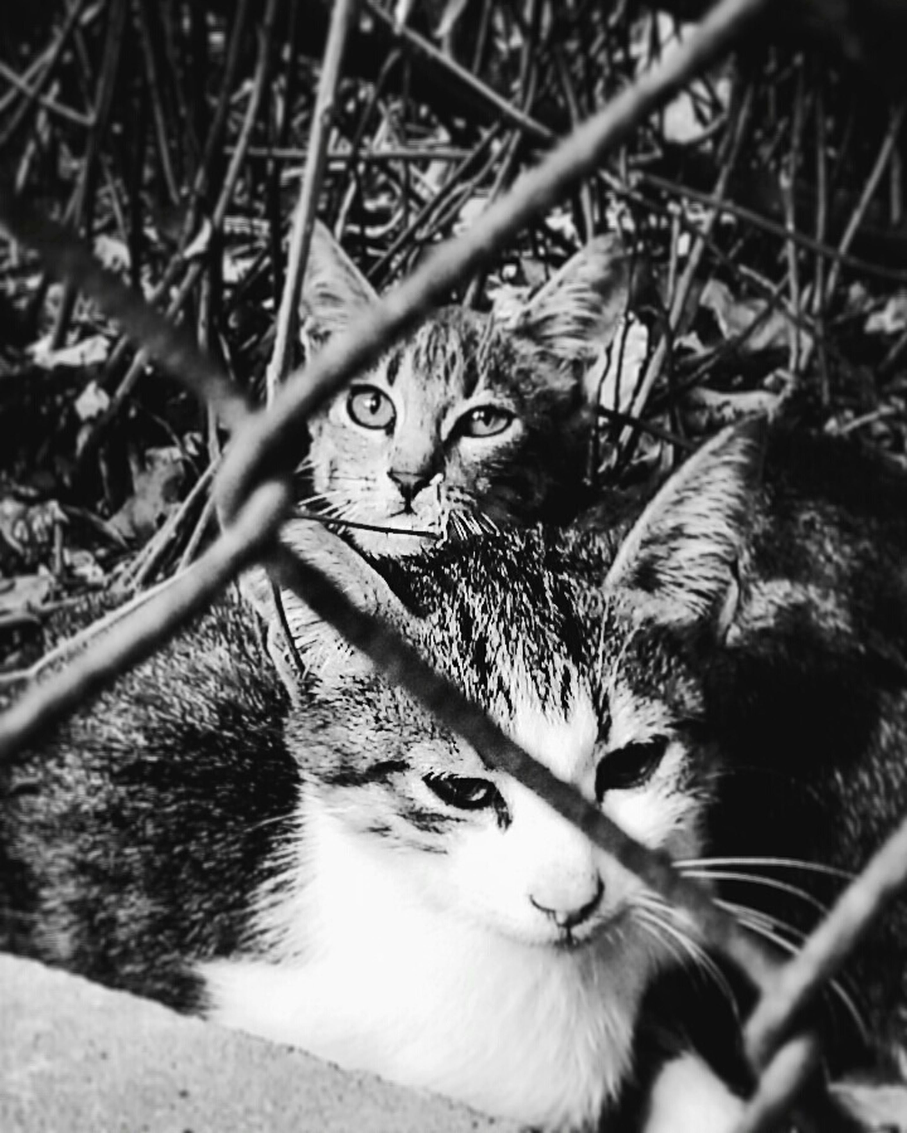 domestic cat, cat, pets, domestic animals, feline, animal themes, mammal, one animal, whisker, looking at camera, portrait, staring, sitting, alertness, relaxation, high angle view, plant, kitten, no people, close-up