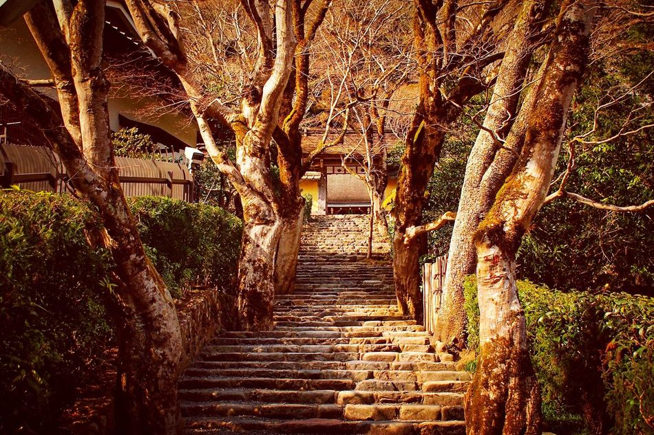 寂光院 大原 京都 Kyoto Kyoto, Japan Travel Destinations 3XSPUnity Enjoying Life Hello World Relaxing Beauty In Nature