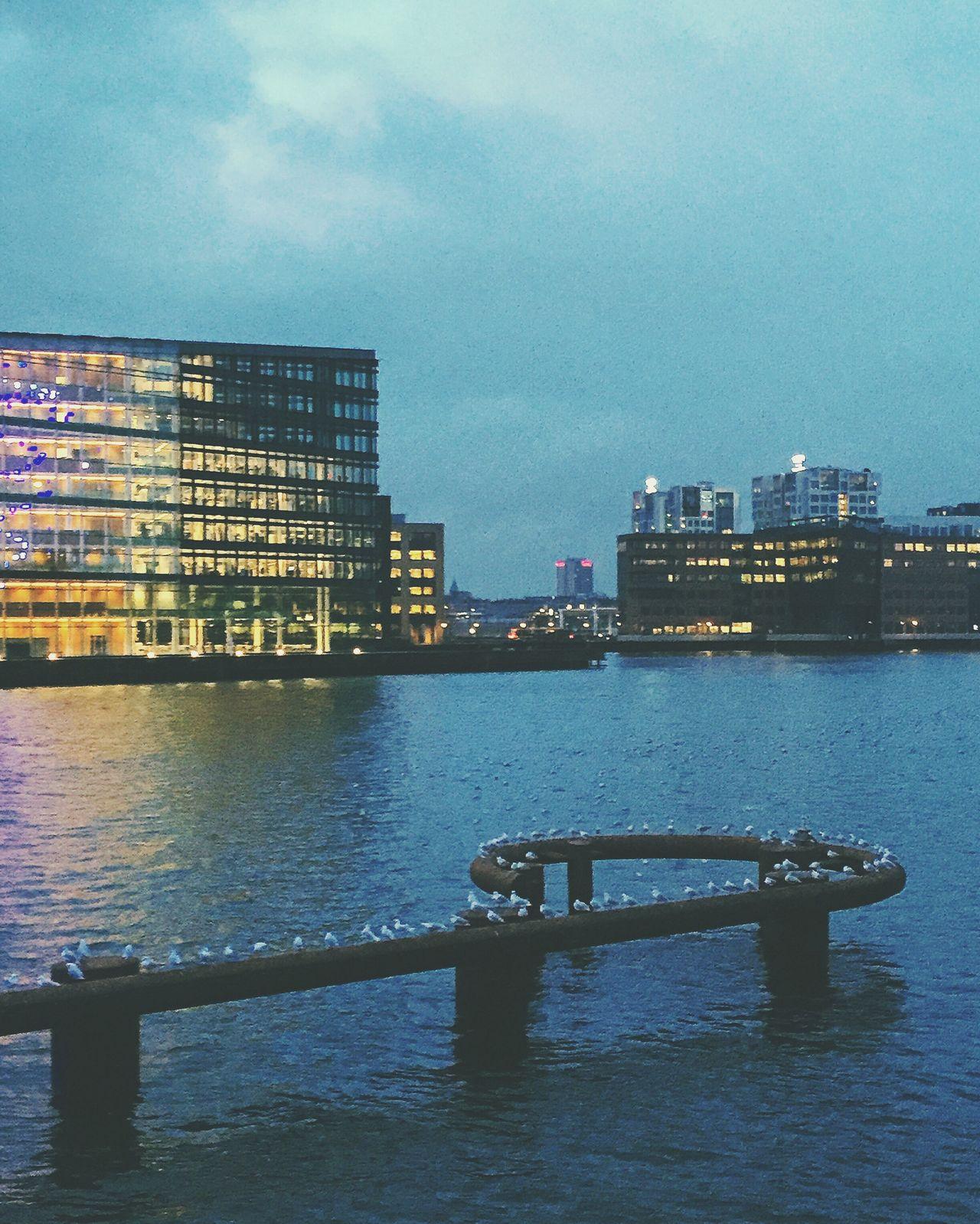 Copenhagen, Denmark Denmark Copenhagen Evening Water Birds Chilling Spring Evening Sky