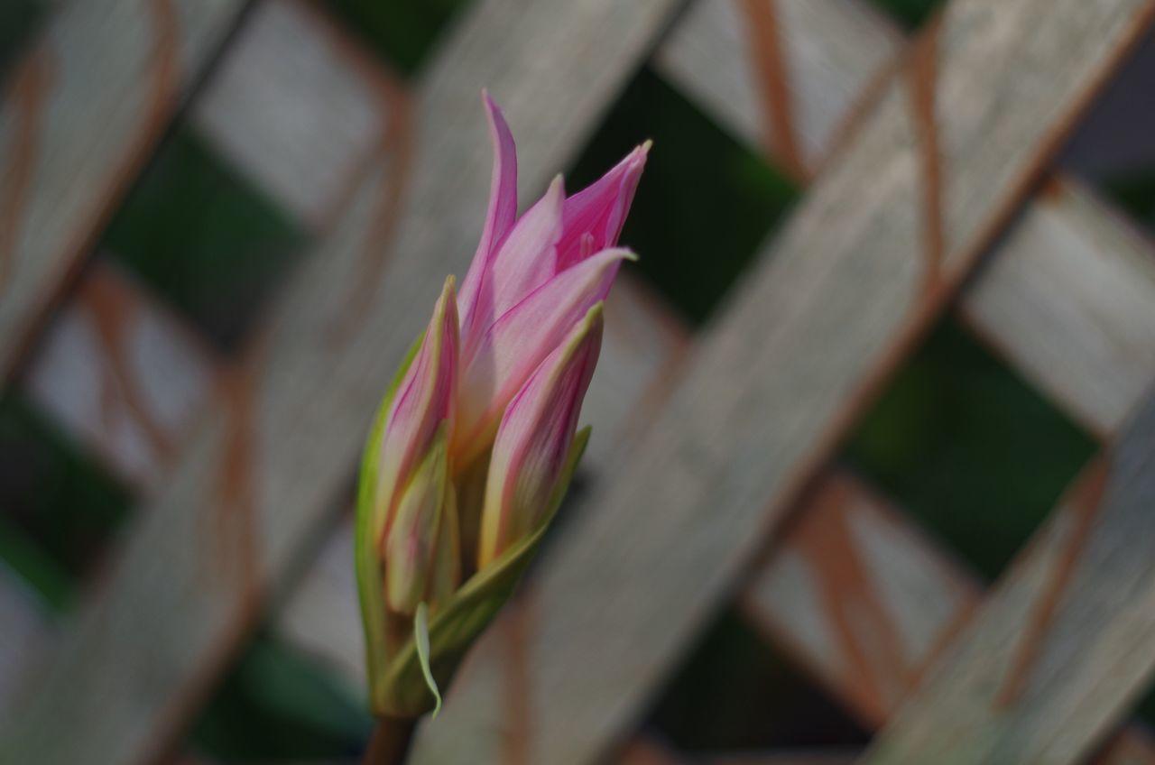 Summer Heat Summer The Purist (no Edit, No Filter) Volna3 Flowers Garden Amaryllis
