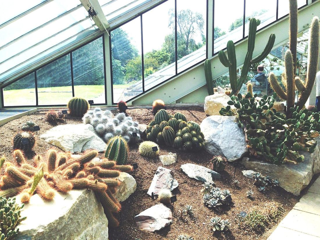 London Kew Gardens Royal Botanic Gardens Gardens Kakteen Plants Wintergarten Botanical Gardens Big City England