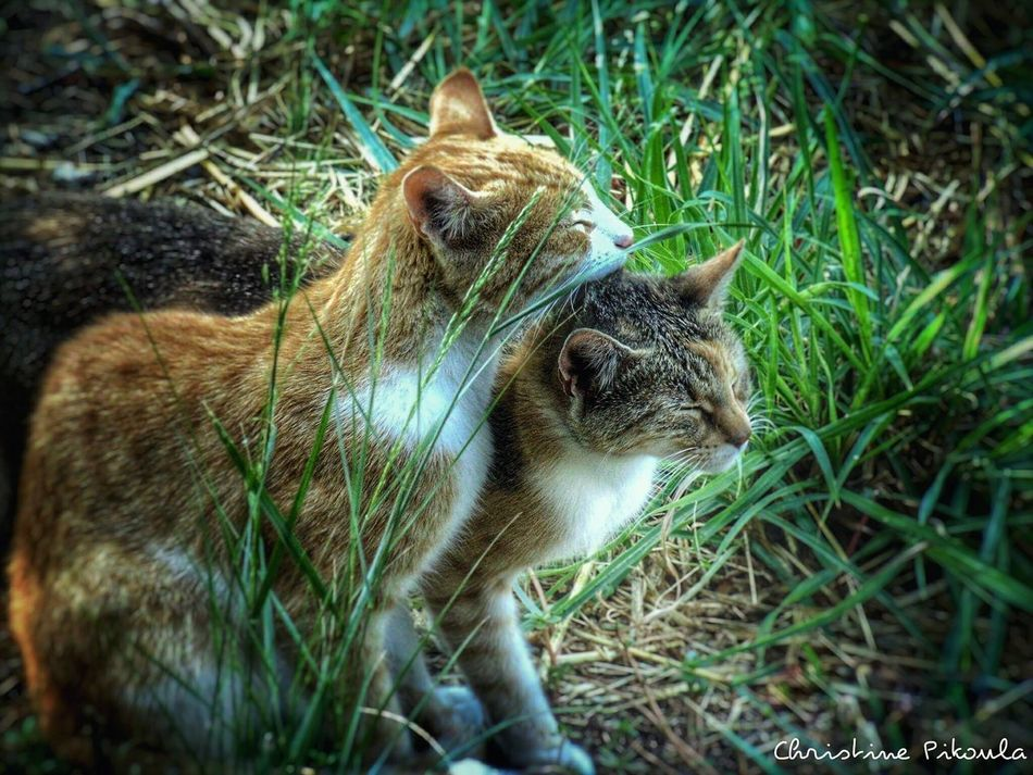 Animal Themes Nature Close-up Cats Lovetime Animal Photography Animal Lover