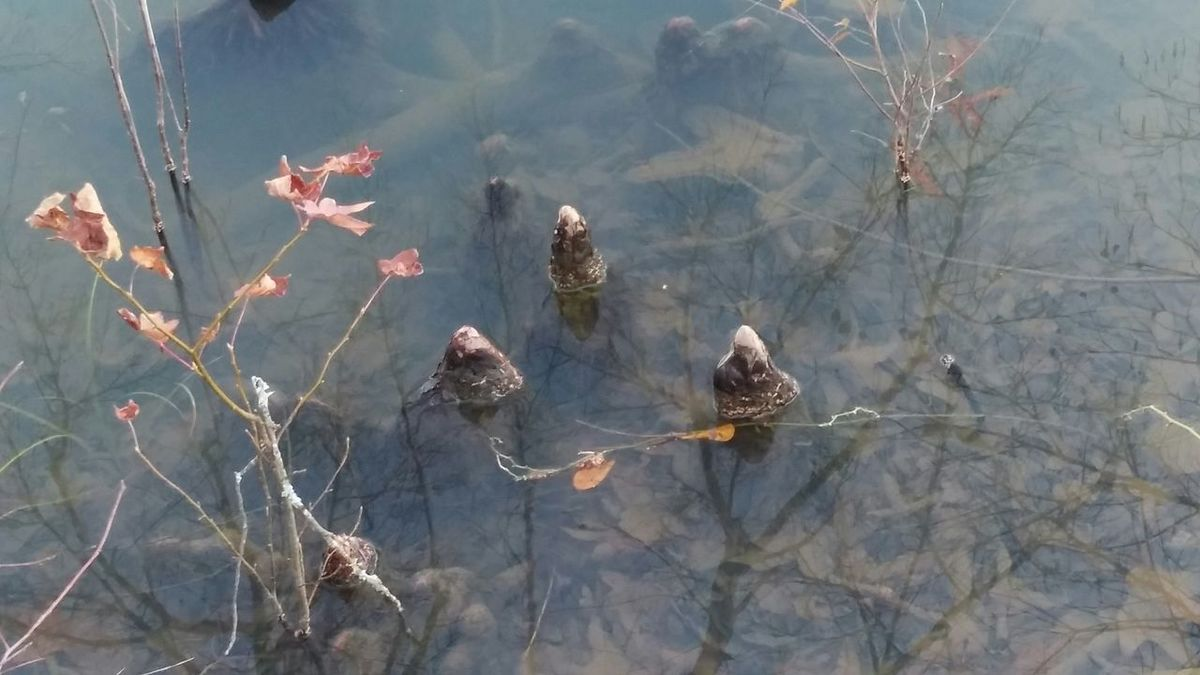 Beauty In Nature Water Underwater Arkansas Check This OutNature Photography Up Close Taking Photos Nature Reflections One Of My Favorites