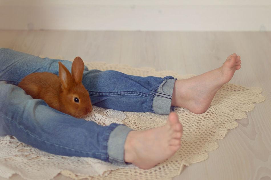 Beautiful stock photos of hasen, Animal Themes, Boys, Brown, Domestic Animals