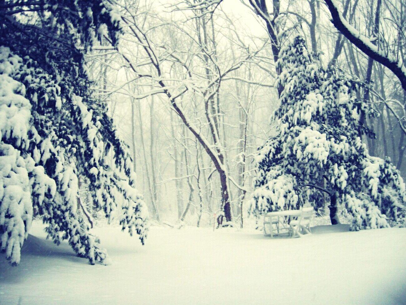 Snow Woods