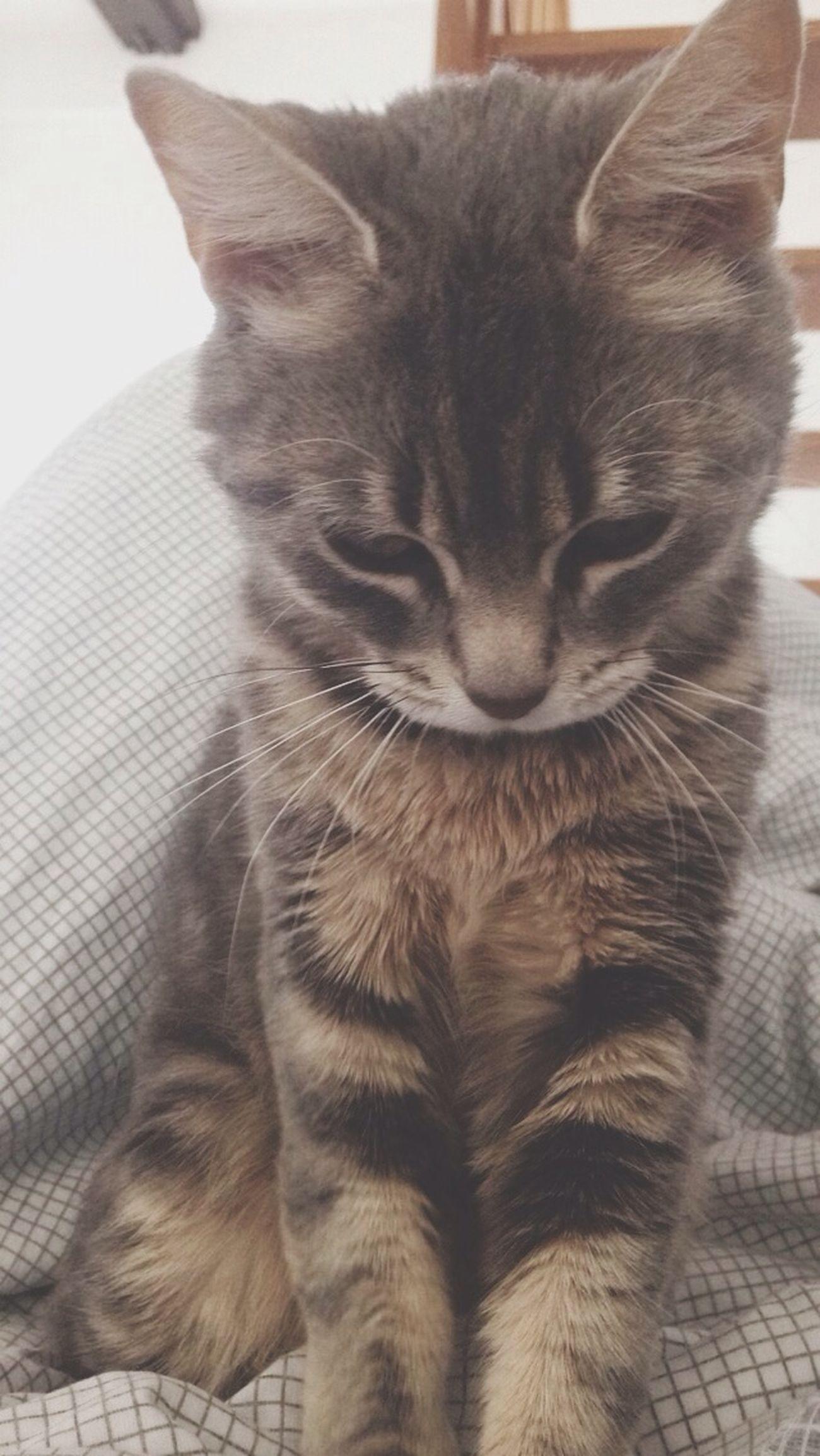Houna Cat Baby Cat ❤️❤️