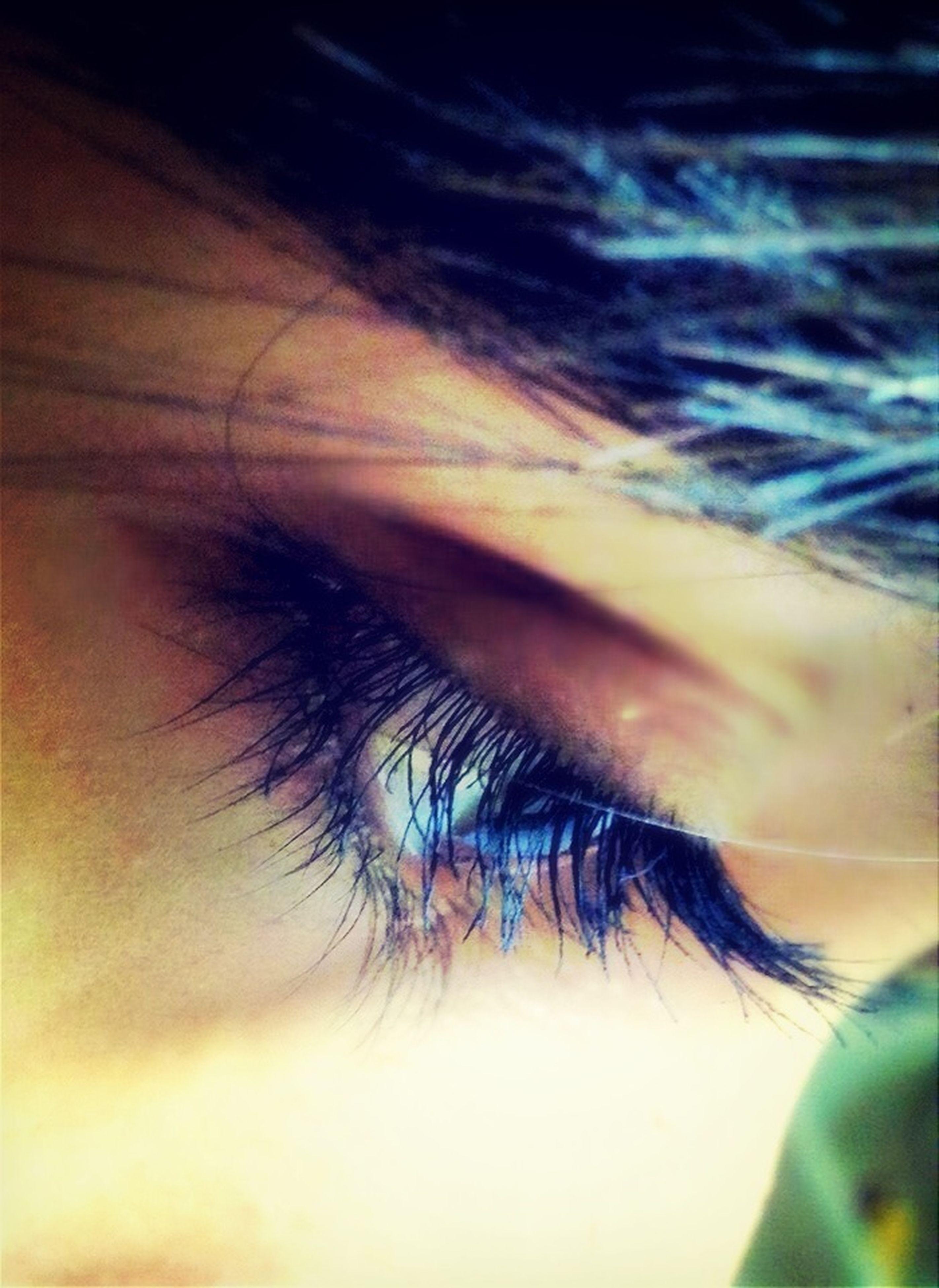 close-up, human eye, part of, eyelash, eyesight, extreme close-up, selective focus, extreme close up, sensory perception, human skin, cropped, macro, human hair, detail, iris - eye, eyeball, human face