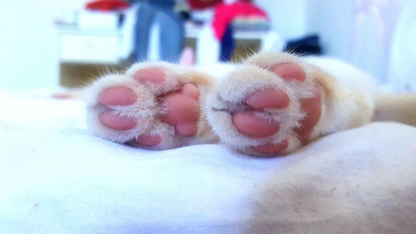 Colour Of Life Sleeping Cat Sleeping Cat Cats Of EyeEm Cats 🐱 Catslife Cats Cats Lovers  Feet Love