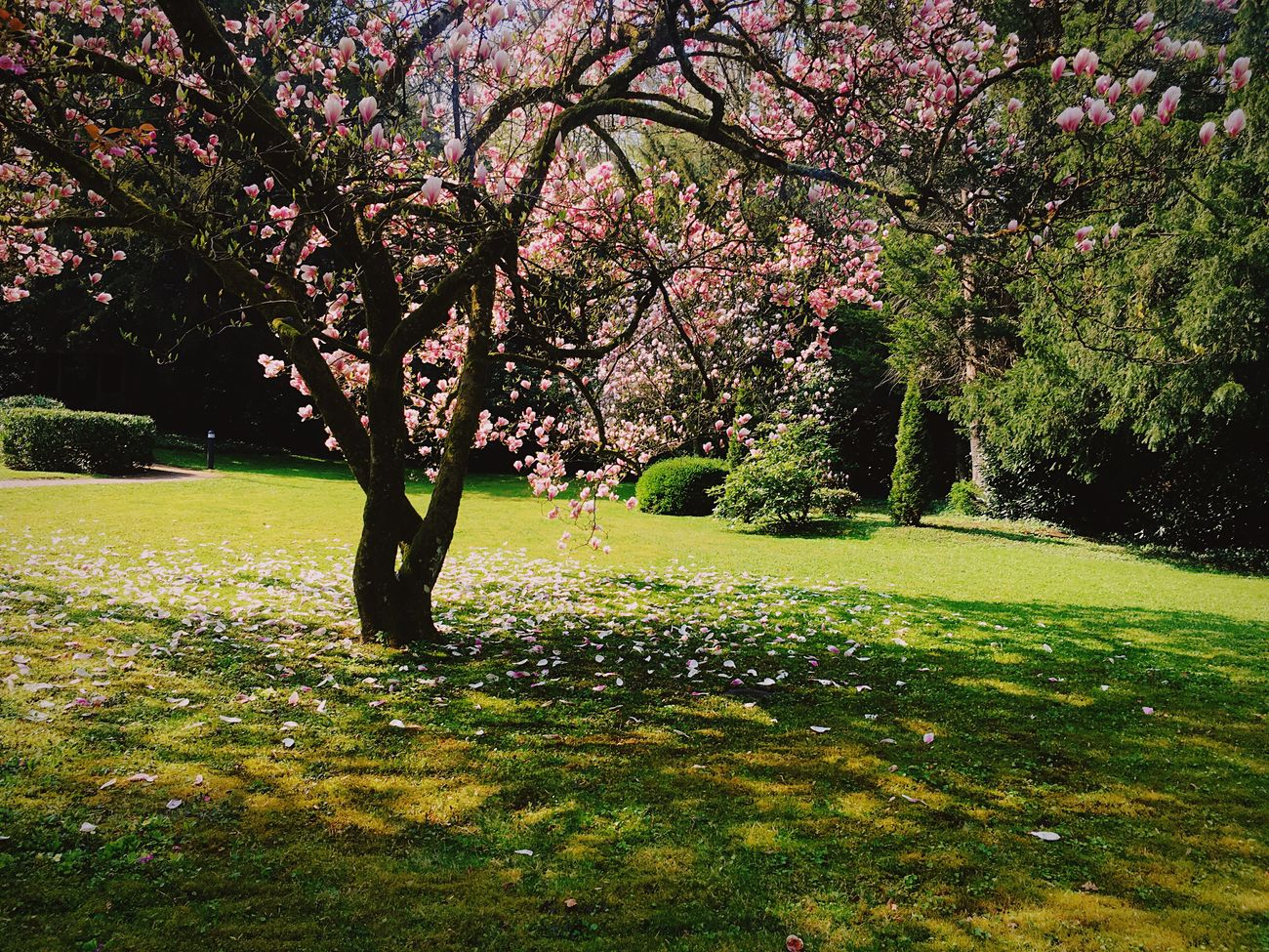 Outdoors No People Springtime Nature Flowers, Nature And Beauty Baden Baden Germany Millennial Pink
