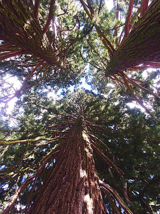 Swiss Kreuzlingen Tree Trees IPhone IPhoneography