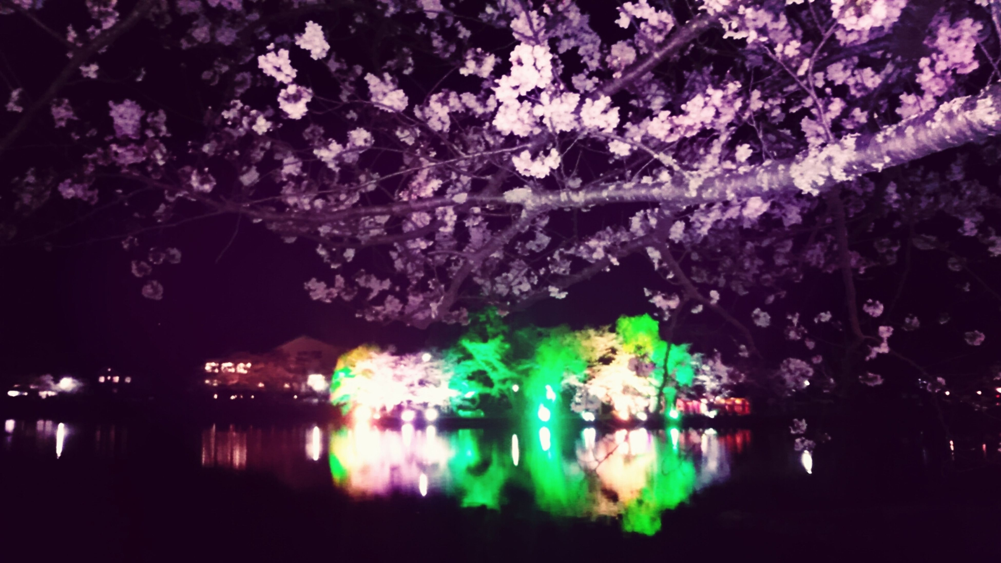 water, reflection, night, waterfront, illuminated, lake, tree, river, built structure, pond, nature, beauty in nature, architecture, outdoors, growth, tranquility, no people, building exterior, flower, branch