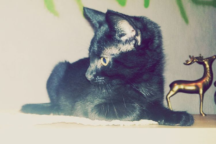 Cat My Baby Black