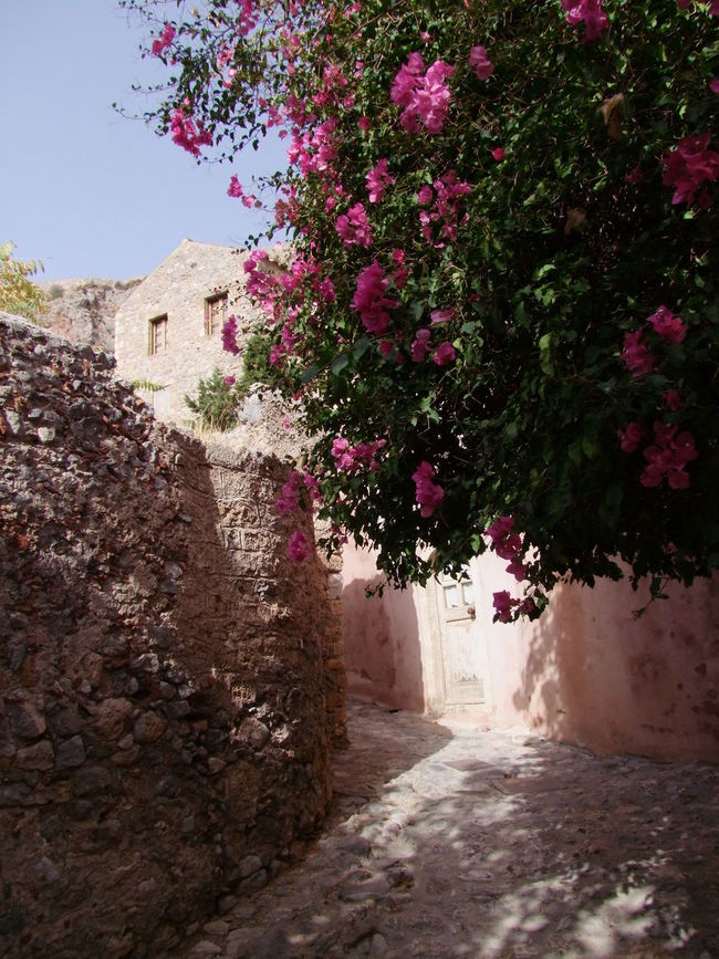 Street in Monemvasia Blue Sky Calm Composition Flowering Shrub Full Frame Greece Monemvasia Nature No People Outdoor Photography Quaint Perspective Stone Buildings Stone Walls Street Sunlight And Shadow Tourism Tourist Attraction  Tranquility Walkway