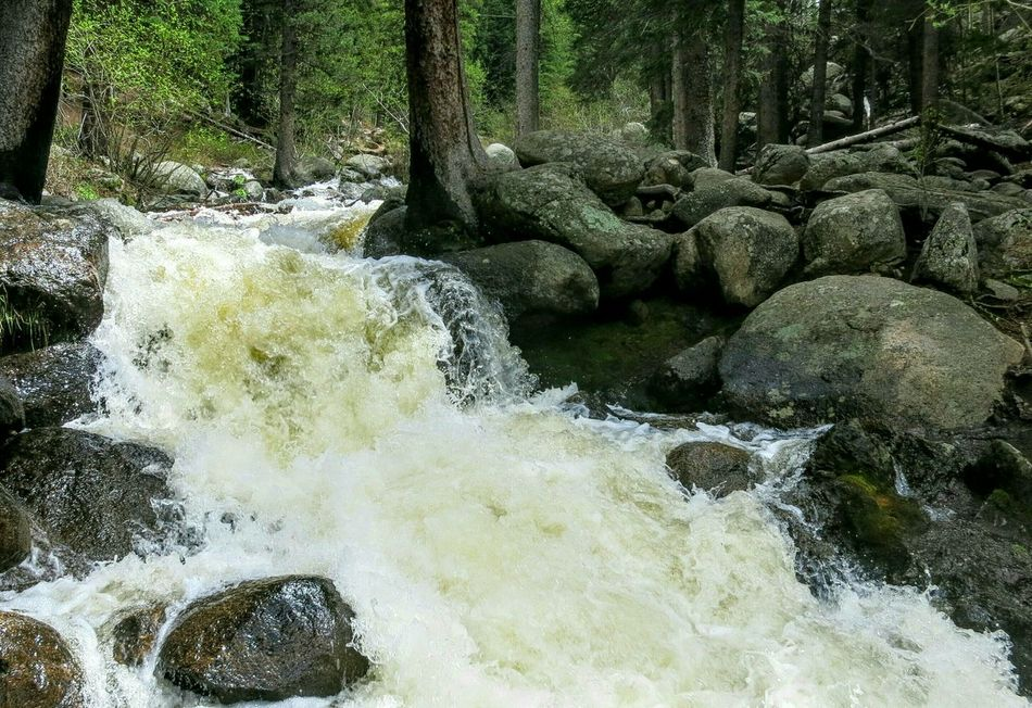 Sound Of Life RoaringRivers Rushingwaters Into The Woods