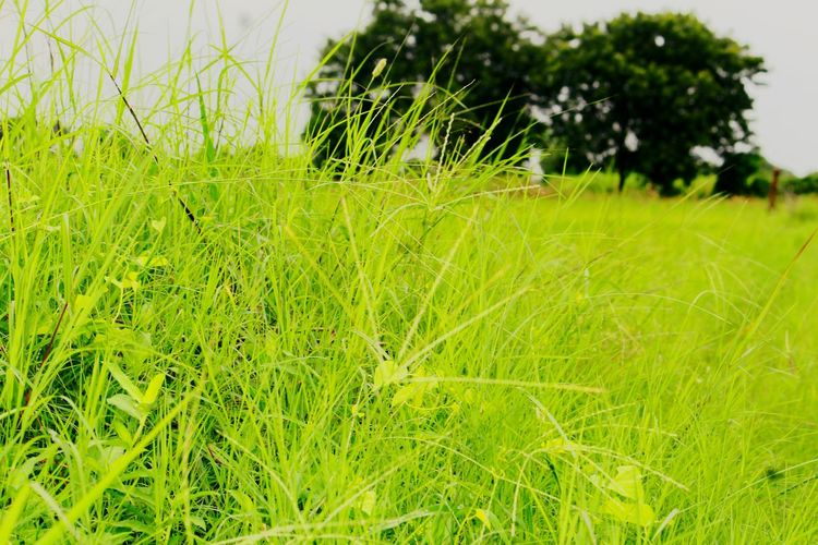 Close-up Architecture Nature Built Structure Green Color Plant No People Selective Focus Outdoors Beauty In Nature Focus On Foreground EyeEm Selects Animals In The Wild Water Full Length Day Grass Flower Head