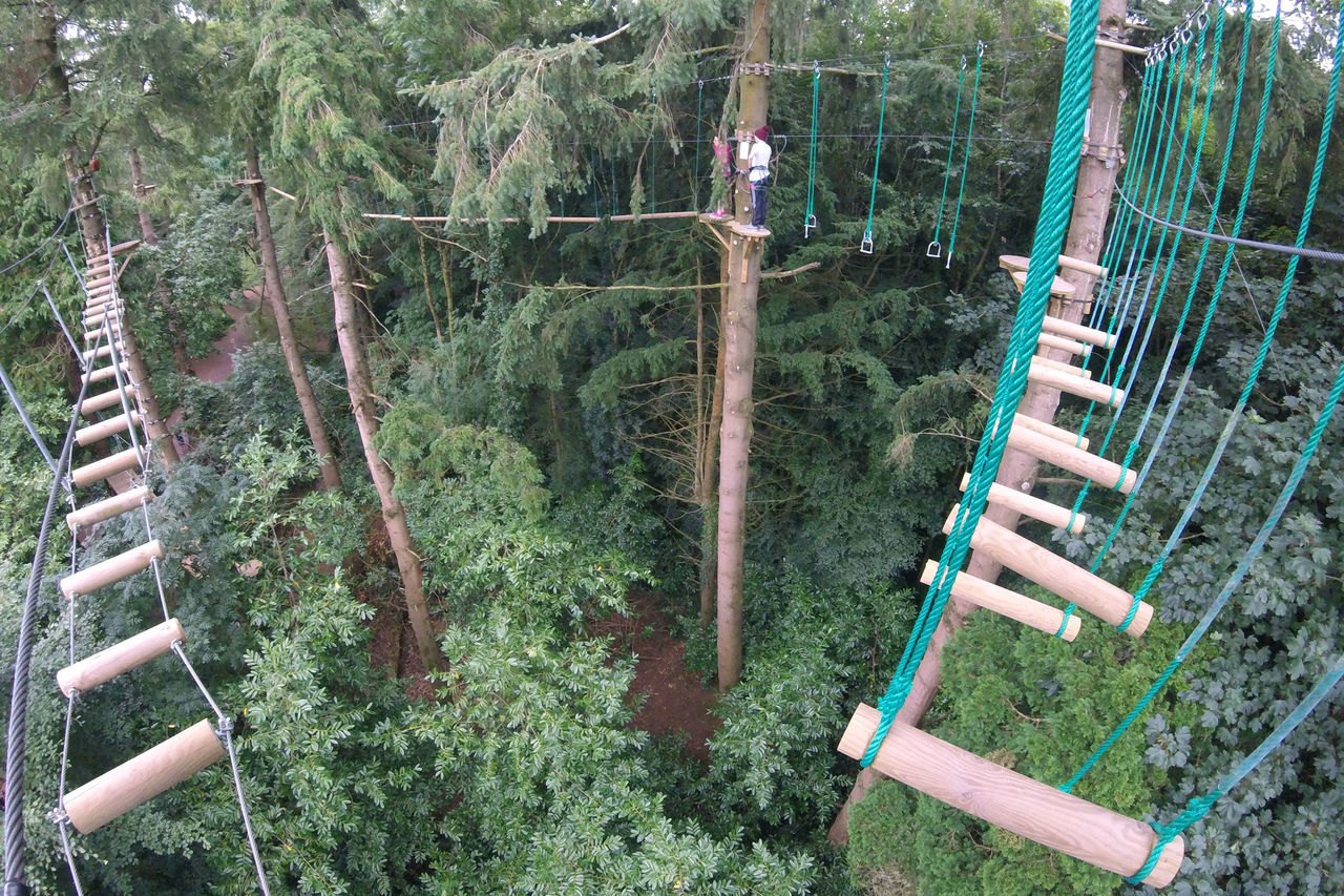 A Long Way Down High In The Trees High Wire Adventure Course In The Forest