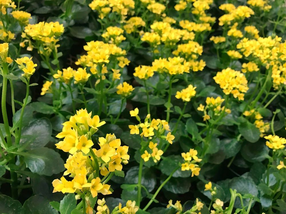 Flower Growth Plant Freshness Yellow Nature Green Color Beauty In Nature Leaf Fragility Petal Outdoors Day Flower Head Blooming No People Close-up Color Colors Colorful Thepxs EyeEm Selects EyeEmNewHere