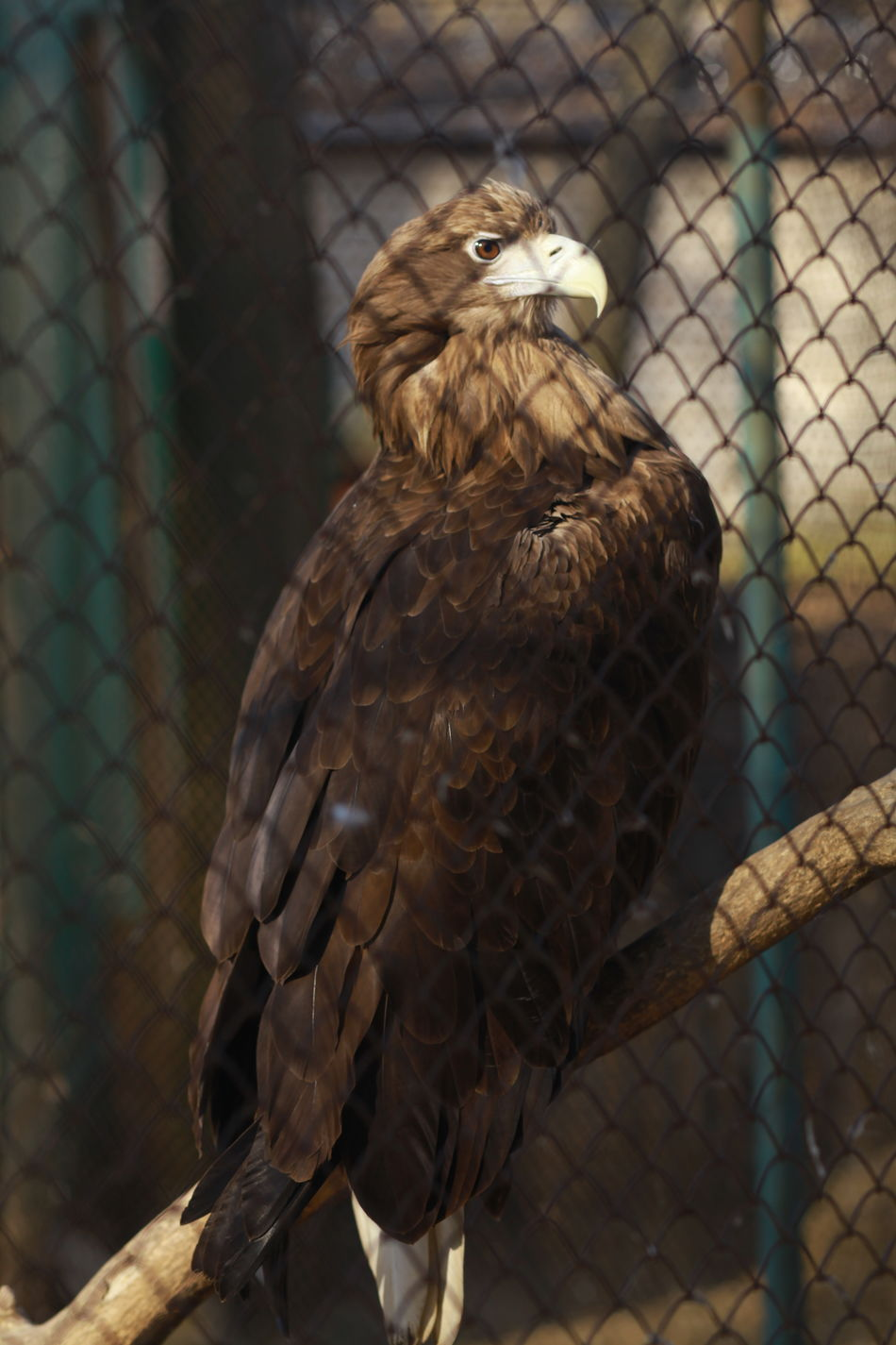 Animal Themes Animal Wildlife Animals In The Wild Bird Bird Of Prey Day Eagle Eagle - Bird Eagles Nature No People One Animal Outdoors Perching
