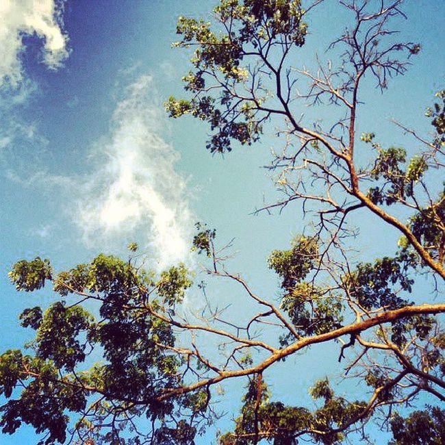 Dotspin Betosalvestrini Art Original Natural Nature Plants Peace Tree Venezuela Sanjuandecolon