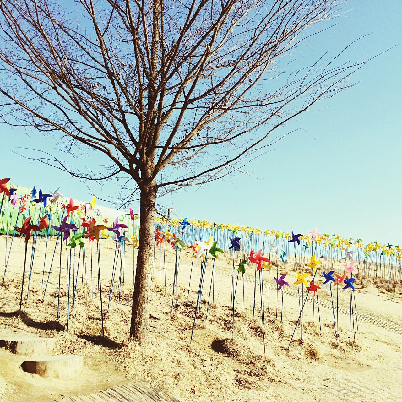 Beautiful stock photos of north korea, Bare Tree, Beach, Branch, Childhood