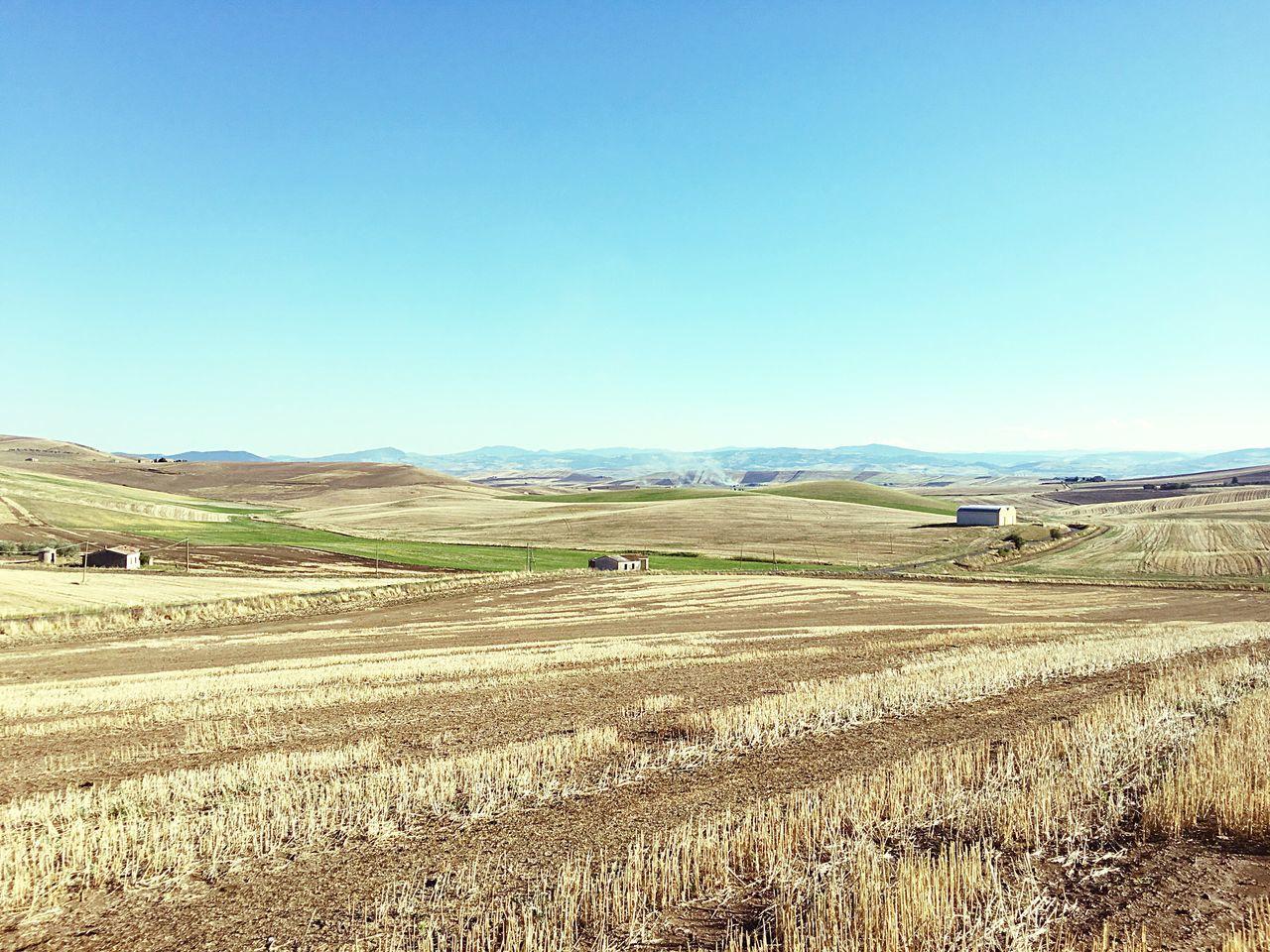 Scenics Landscape Countryside Italy Harvesting Basilicata, Italy