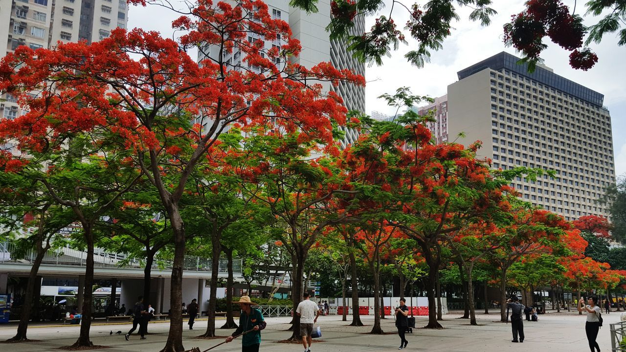 Hong Kong Flame Trees Blossom Red On Fire The Great Outdoors - 2016 EyeEm Awards