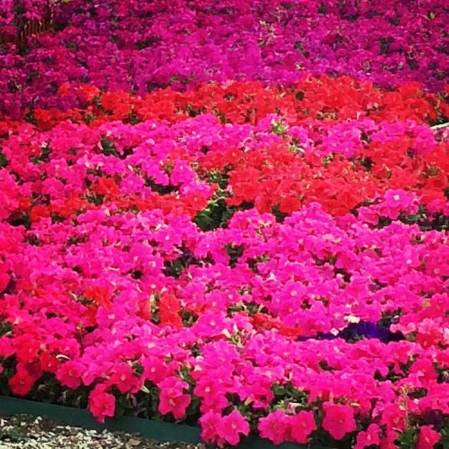 Flower Beauty Hello World Pink