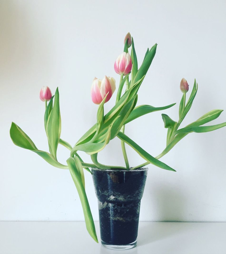 Tulips Flora Flowers My Point Of View Nature Learn & Shoot: Simplicity Simple Clean Shot