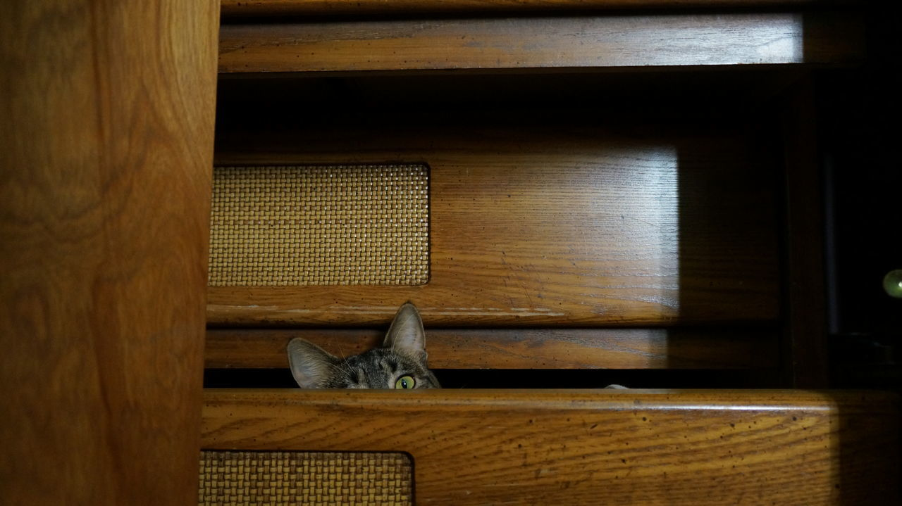 Animal Themes Cat Day Drawer Ears Eye Furnitures Hiding Indoors  Looking No People Peeking Playful