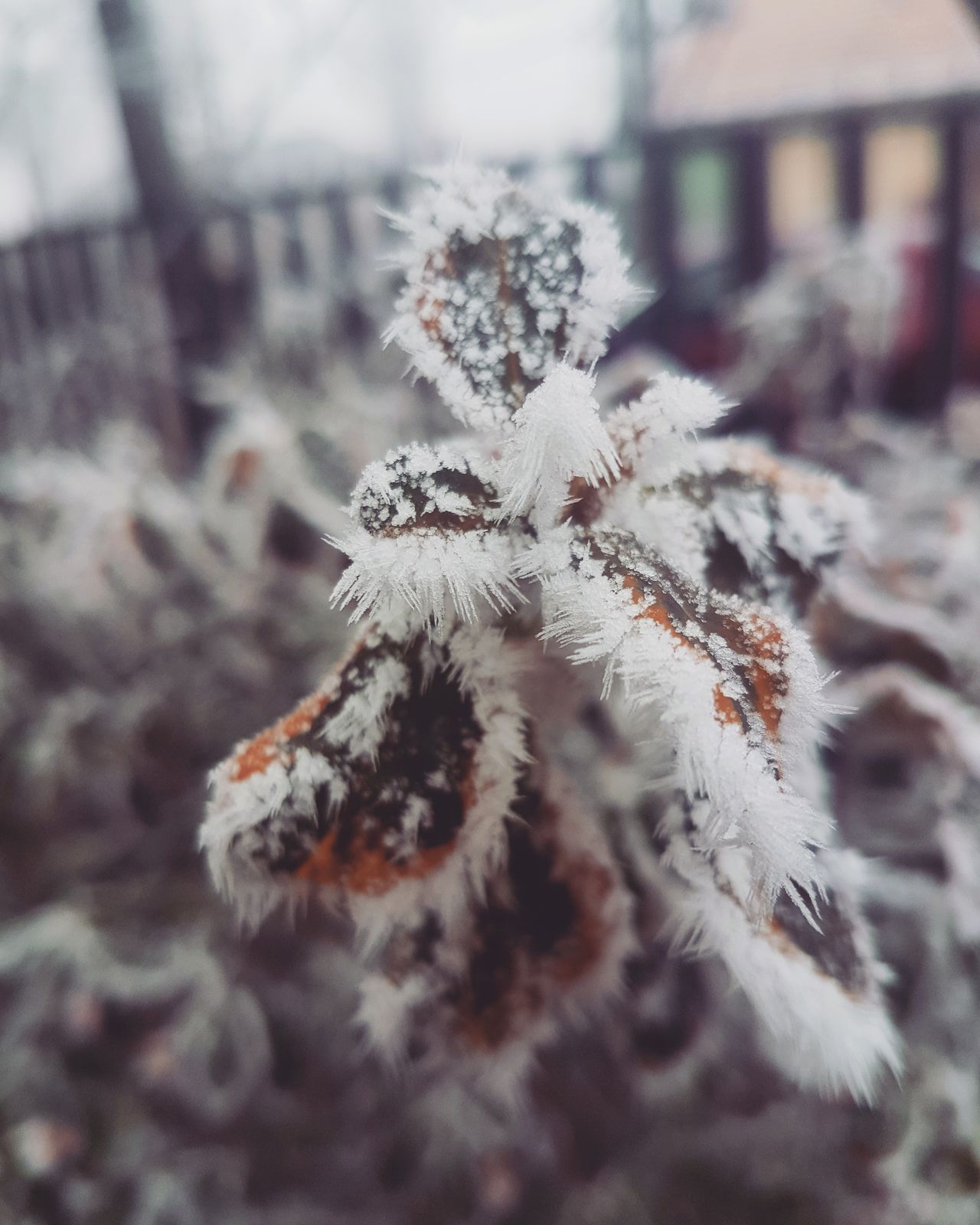 Winter Cold Temperature Snow Nature Close-up Beauty In Nature Frozen Outdoors Snowflake -15°C