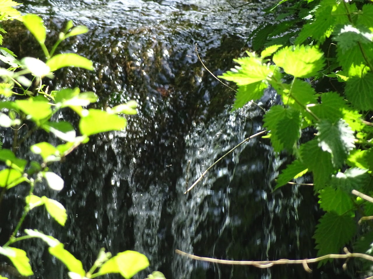 water, leaf, growth, motion, nature, tree, plant, day, wet, outdoors, drop, no people, green color, tree trunk, spraying, beauty in nature, close-up, freshness