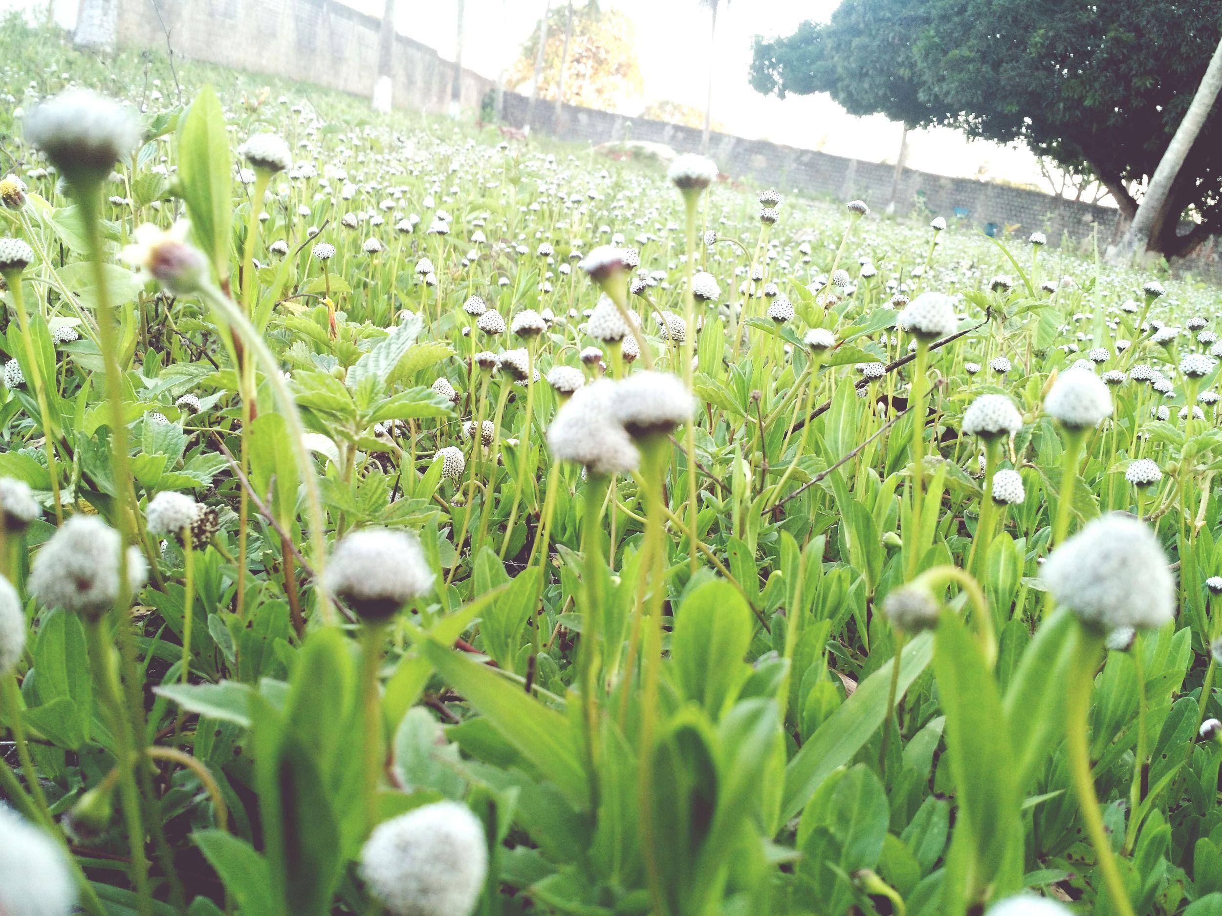 Meu infinito particular. Lindo  Flores Natureza Vida Mato Fotografia Celular Novo Amei