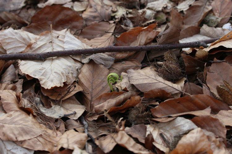 Alte Blätter Frühlingserwachen Im Wald Nature Neuer Trieb Neues Leben Wald Waldspaziergang