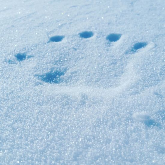 ❄🖑❄ Winter Cold Temperature Snow Blue Weather White Color Frozen Nature No People Backgrounds Close-up Day Outdoors Hand Print Sparkly Snow Print Hand In Snow EyeEmNewHere
