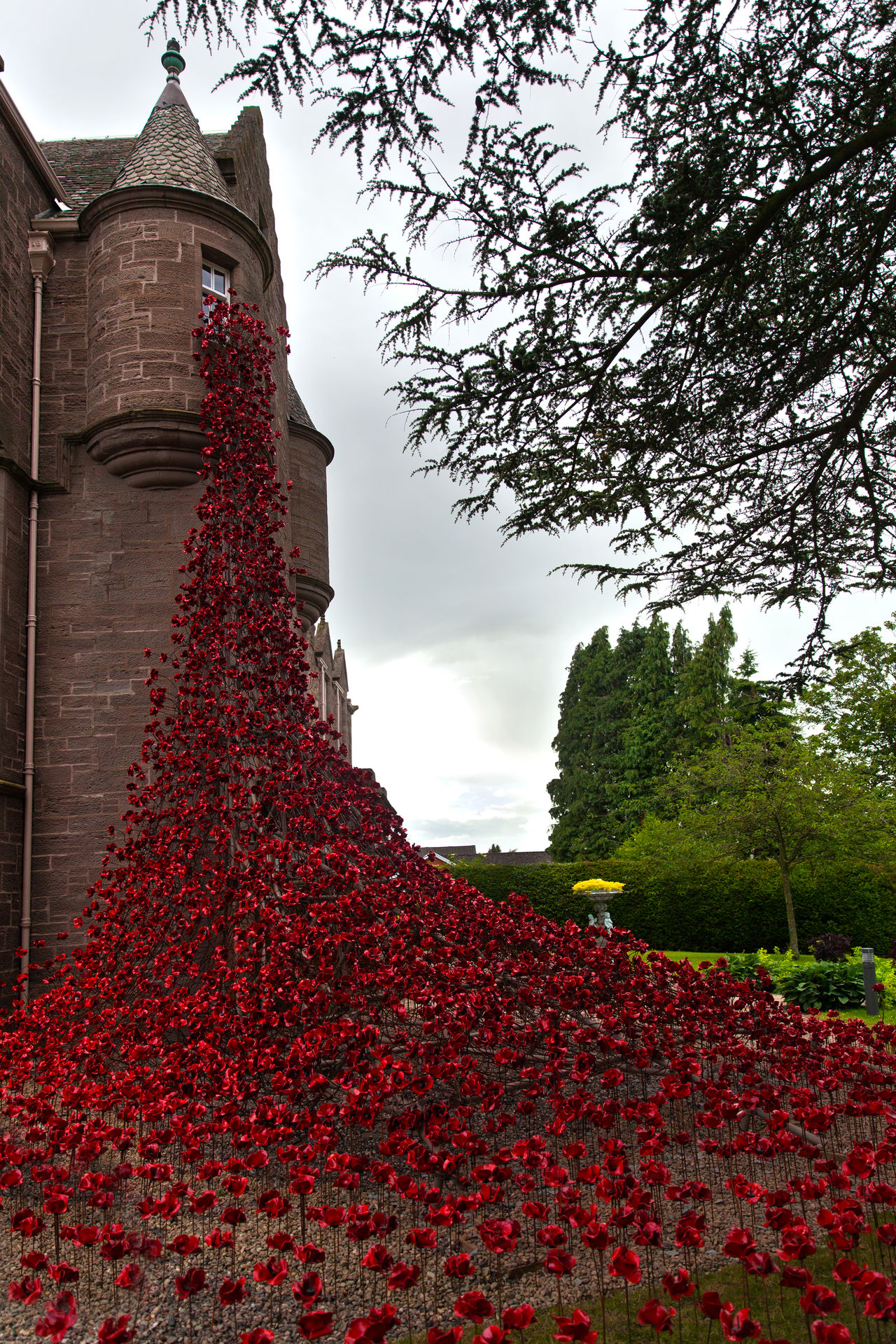 Art Black Wach Castle Firstworldwar Lest We Forget Lestweforget Paul Cummins Perth Perthshire Poppies  Poppies Field Poppy Poppy Flowers Rememberance Day Rememberancesunday Remembrance Scotland Scottish Scottish Castle Scottish Regiment Scottish Soliders The Black Watch Theblackwatch Tree Ww1